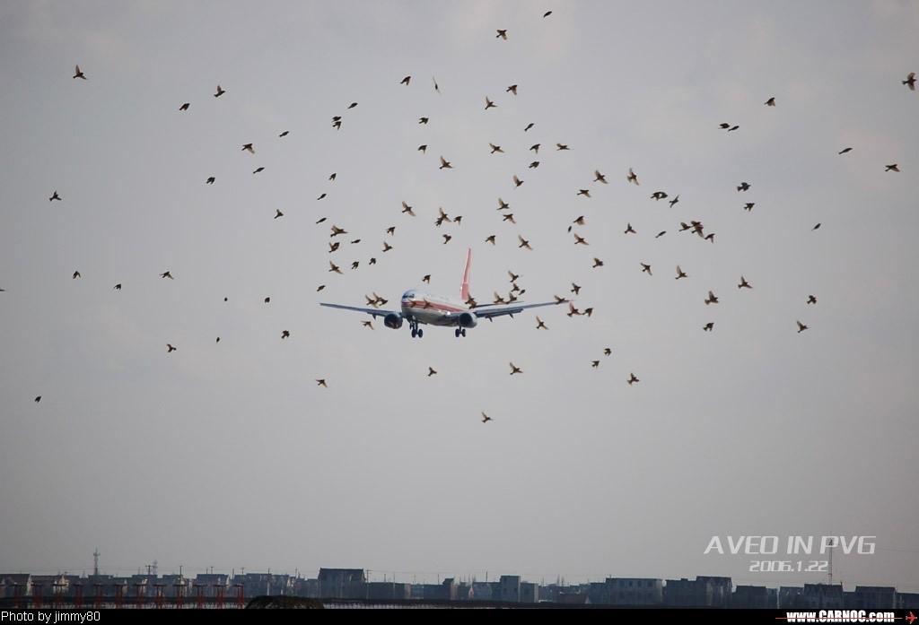 Re:冬日午后,狂扫PVG BOEING 737-800 B-2167  中国上海浦东机场