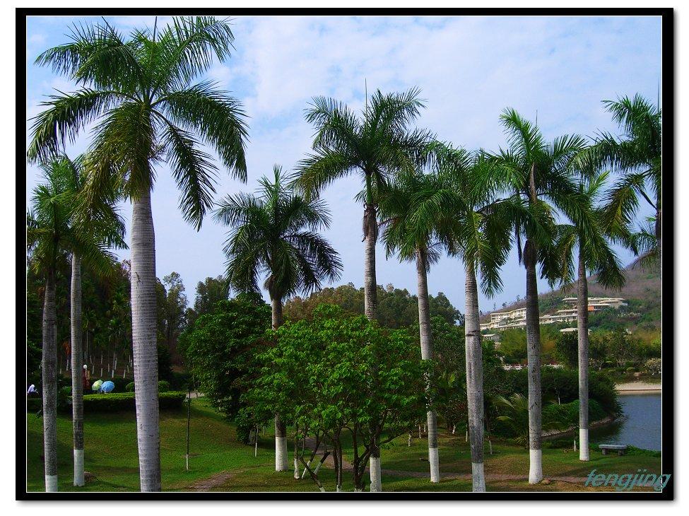 海南风景树图片大全