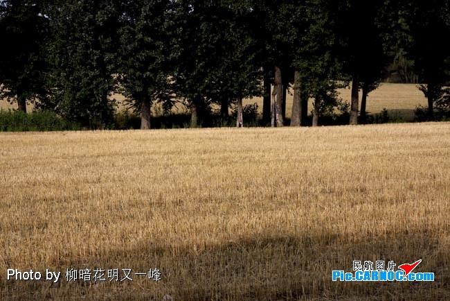 [原创]首都机场附近的麦子熟了