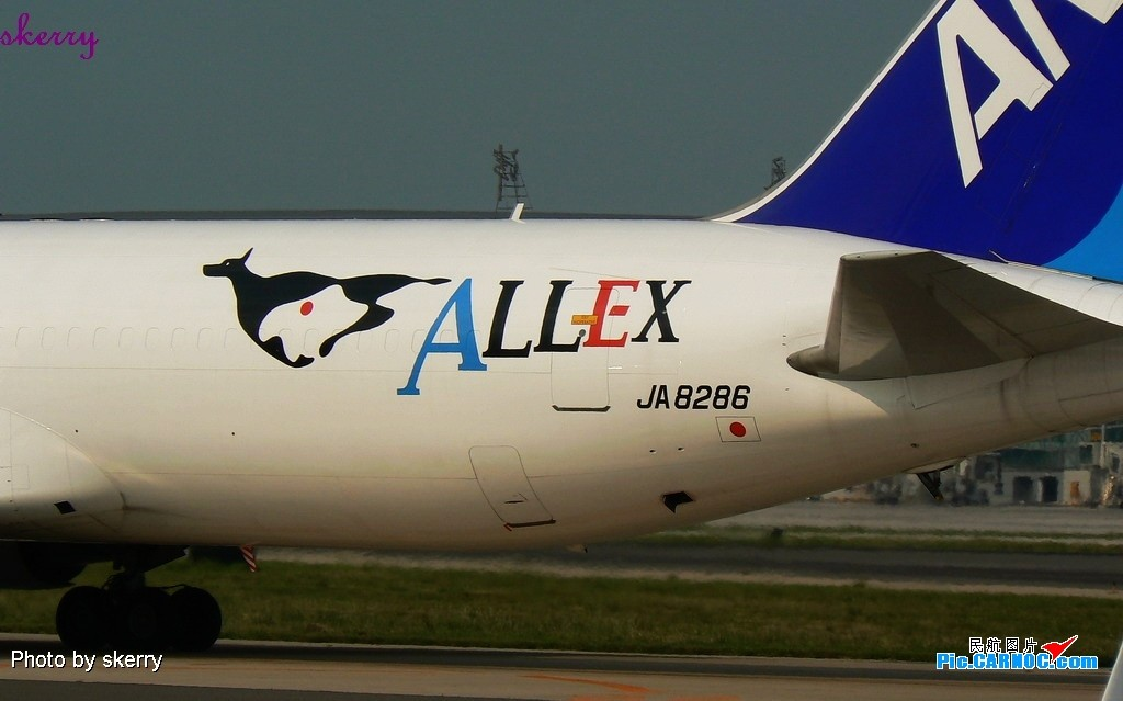 Re:[原创]***都拍A380去了!我就在TSN拍ANA的新装卡狗-ALLEX<767-300BCF首发>!*** BOEING 767-300BCF JA8286 中国天津滨海机场