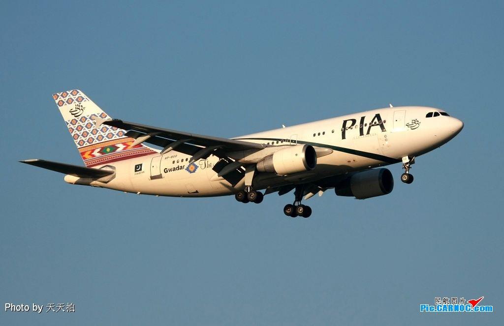 Re:[原创]空中飞毯 A320 AP-BGO 中国北京首都机场