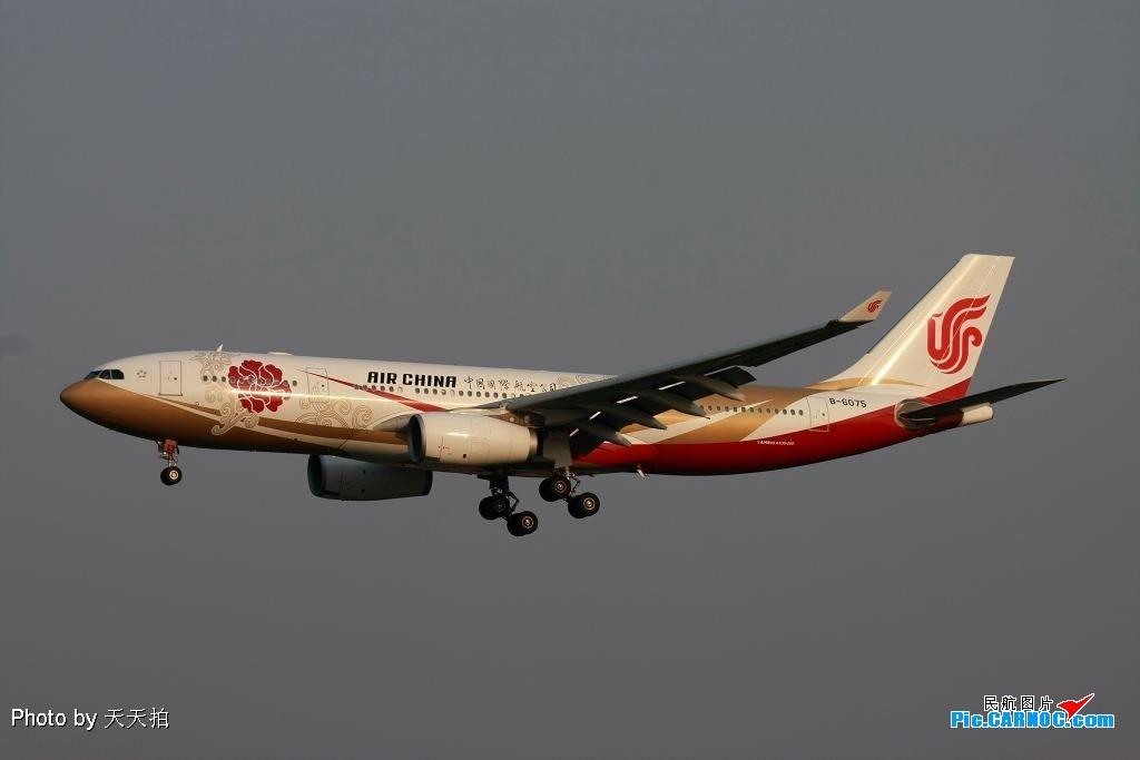 Re:[原创]今日雾里看紫金号【高贵】!!! A330 B-6075