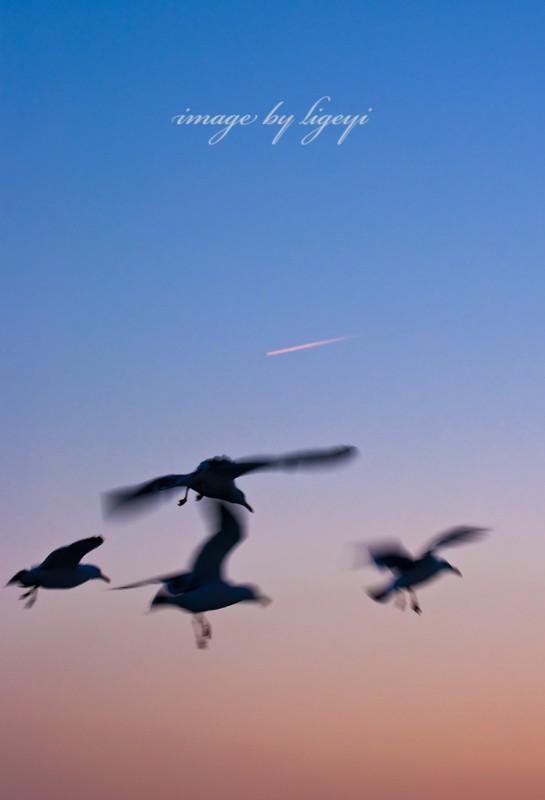 [原创]飞机图片可否这样拍?烟台归来没图可发了...附带海上拍的飞机和冷饭