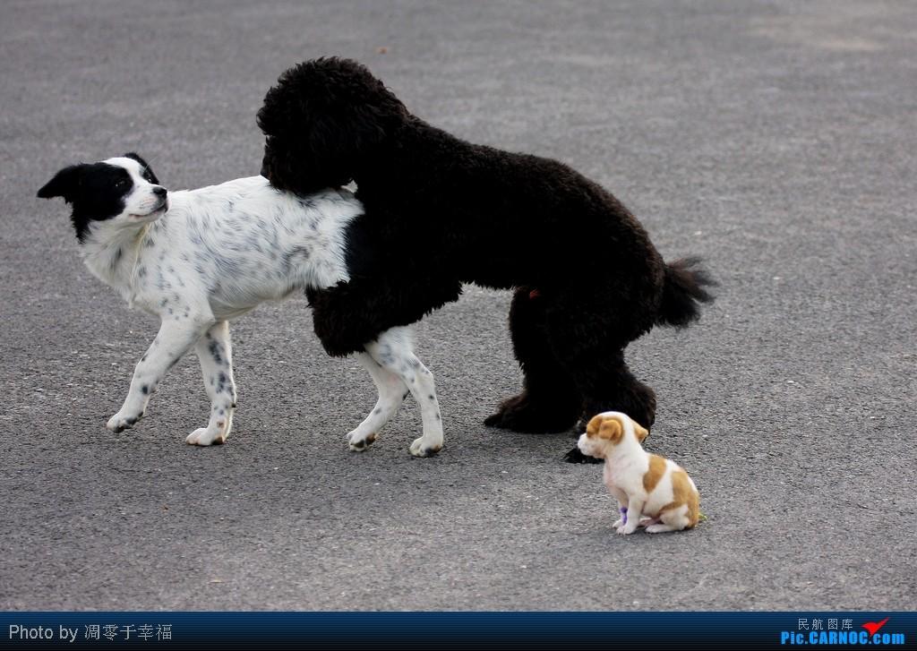 Re:[原创]【BLDDQ】秋--相当舒坦的B-2468,随地小便的狗狗+少儿不宜的片片..着火的就不发了..