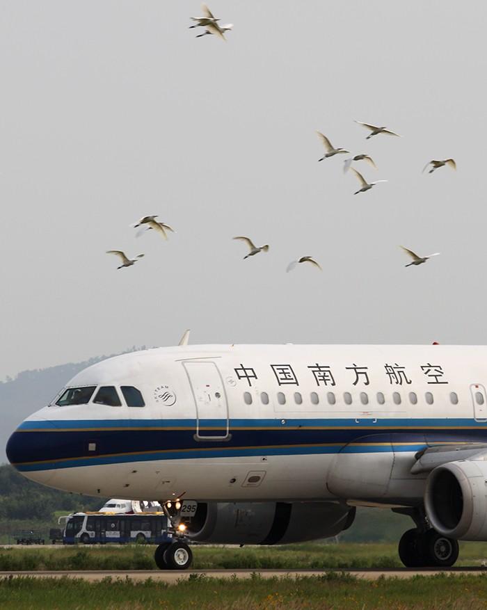 [原创]十三钗 AIRBUS A319-100 B-2295 中国南京禄口机场