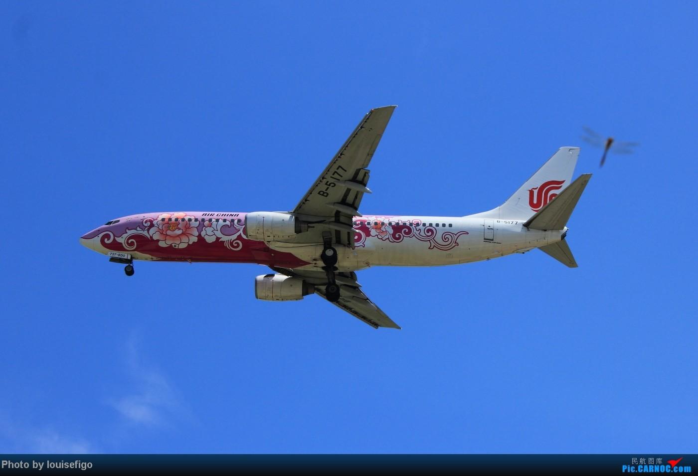 Re:[原创]两张难得一见  绝对不一样的牡丹双飞!粉牡丹与红牡丹!  :) BOEING 737-800 B-5177 北京首都国际机场