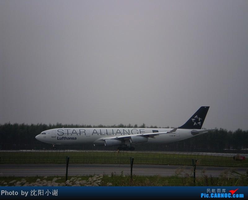 Re:[原创]沈阳桃仙机场 9月25日 9月26日拍摄 汉莎航空星空联盟A340 东方航空A300 AIRBUS A340-300 D-AJGC 沈阳桃仙机场