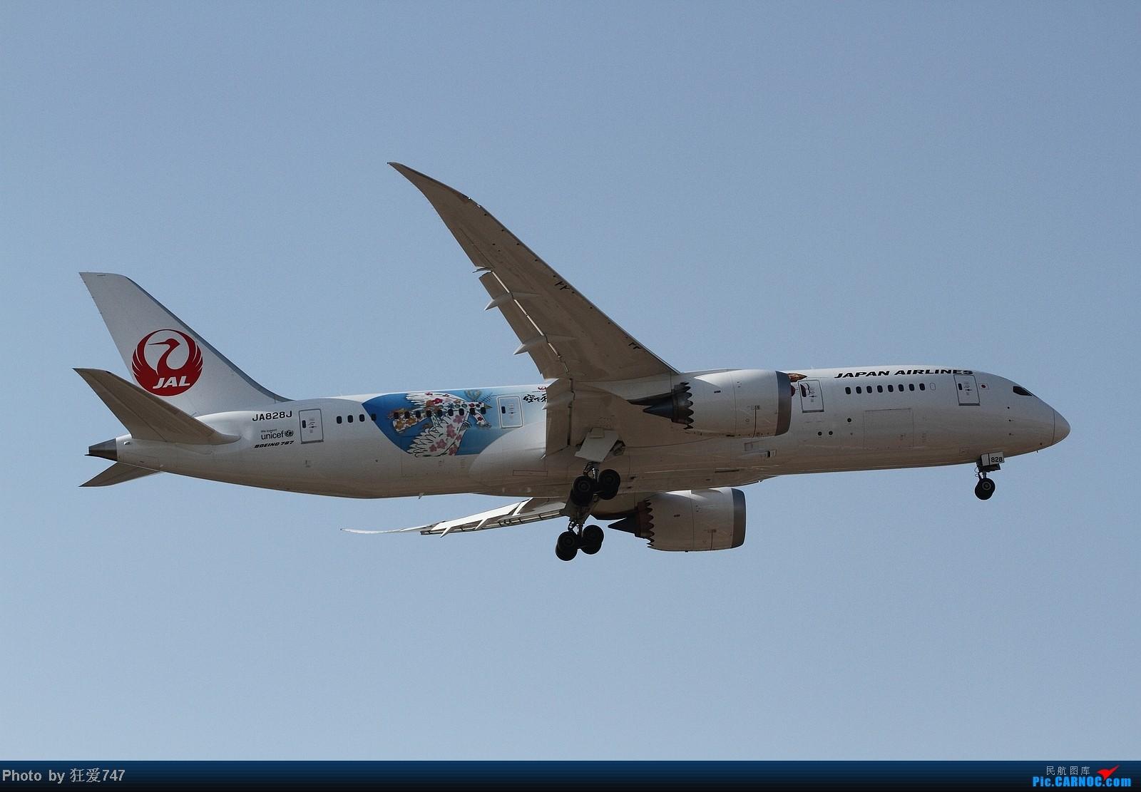 Re:[原创]今天守候01带来的收获 BOEING 787 JA828J 中国北京首都机场