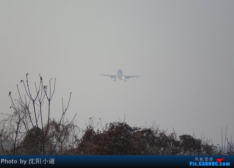 [原创]2013年1月13日,沈阳桃仙机场,大雾,酷航777,南航330,韩航747. AIRBUS A321-200 B-6711 中国沈阳桃仙机场
