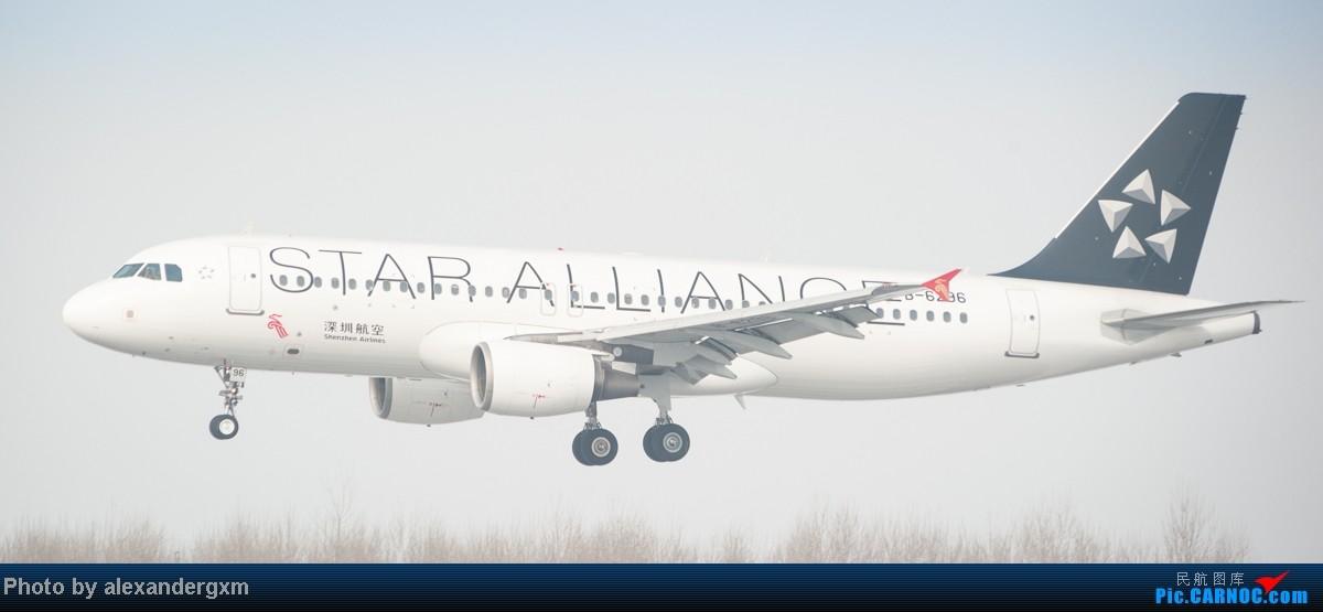 Re:[原创]{SHE}2013年2月13日,春节后第一贴。国航牡丹彩绘,附带机场飞友合影。 AIRBUS A320-200 B-6296 中国沈阳桃仙机场
