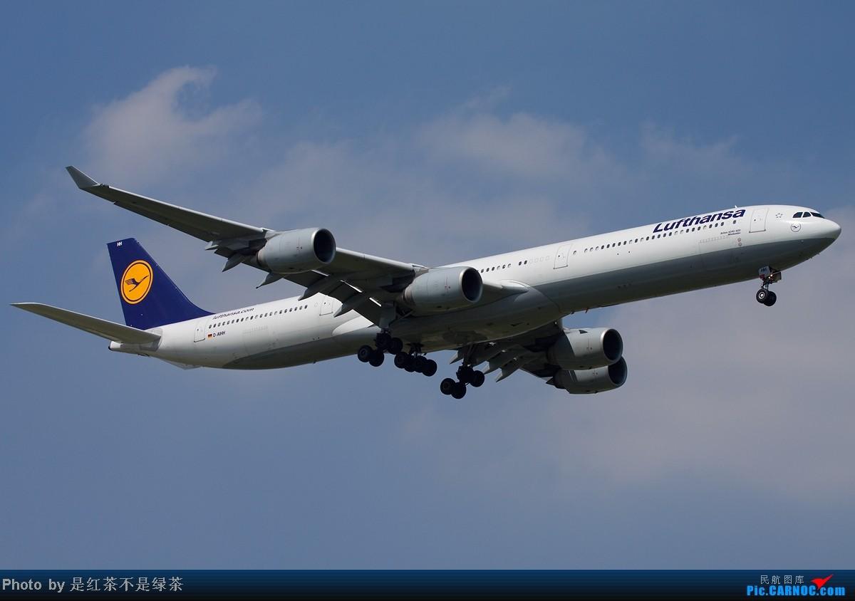 Re:[原创]【红茶拍机】顶着上海40度的高温,6天之内去了三次PVG,我是不是疯了!当然回报不错! AIRBUS A340-600 D-AIHH 中国上海浦东机场