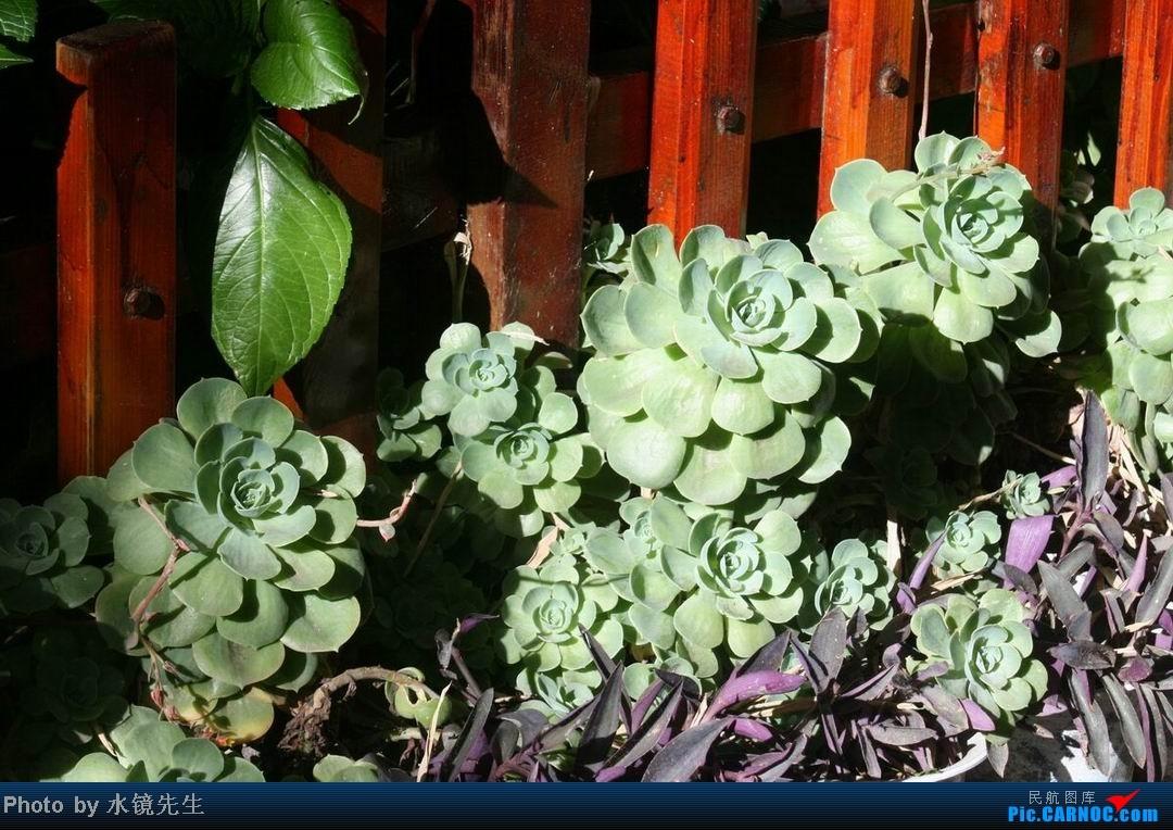 Re:[原创]水镜先生新版游记[2013年09月][第075集07部]罗布林卡:□□私家花园