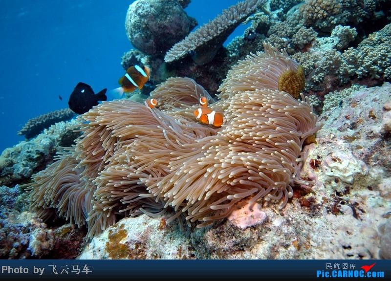 壁纸 海底 海底世界 海洋馆 水族馆 桌面 800_575