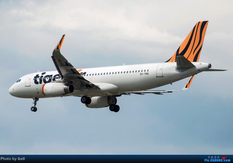 Re:[原创]【SIN樟宜拍机】星航'白星星',沙特阿拉伯,不丹皇家航空,荷兰皇家航空,卖萌的中货航744F。。。 AIRBUS A320-232 9V-TRM 新加坡樟宜机场