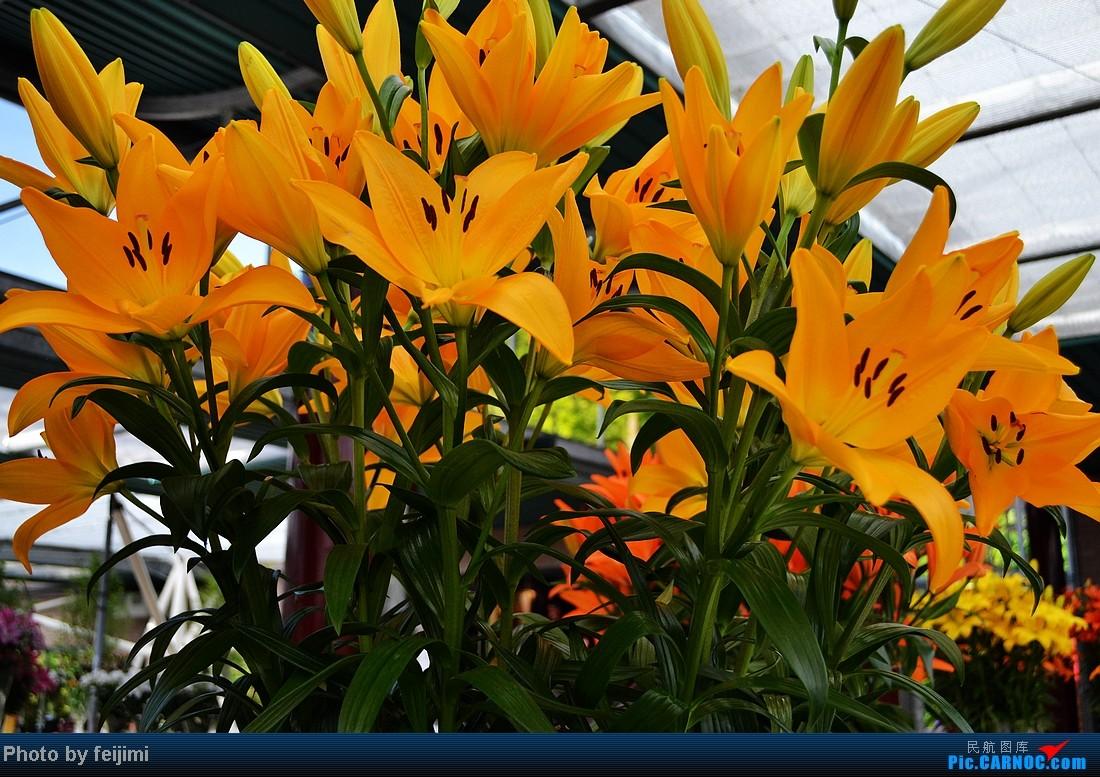 Re:[原创]【子安﹠游记】欧洲五国行——第二集:橙黄色的荷兰