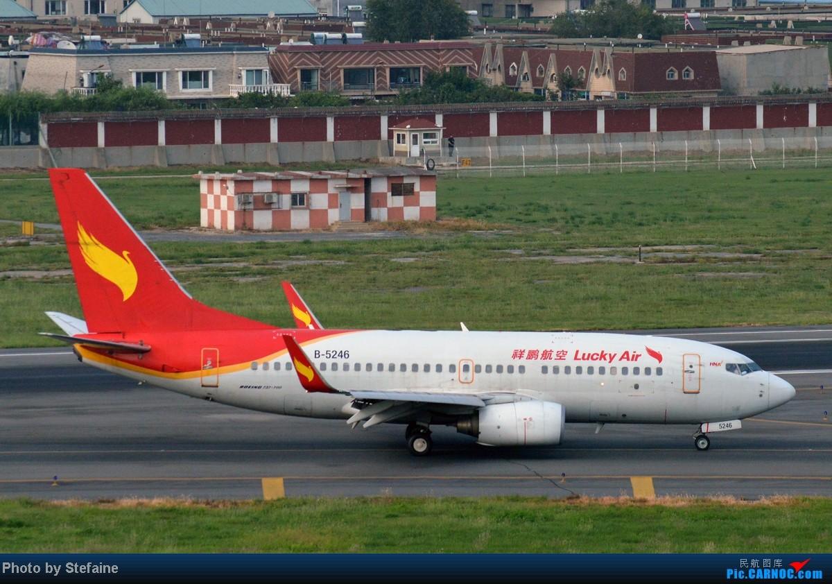 Re:[原创][DLC]暑期那些光临DLC的大小家伙们 BOEING 737-700 B-5246 中国大连周水子机场