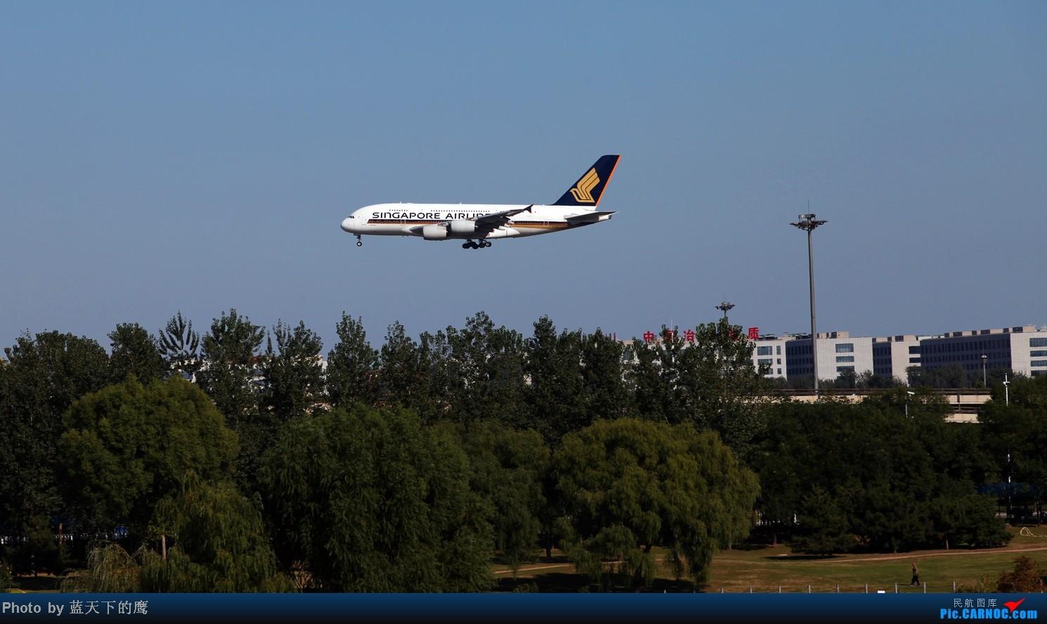 新加坡航空A380机场掠影