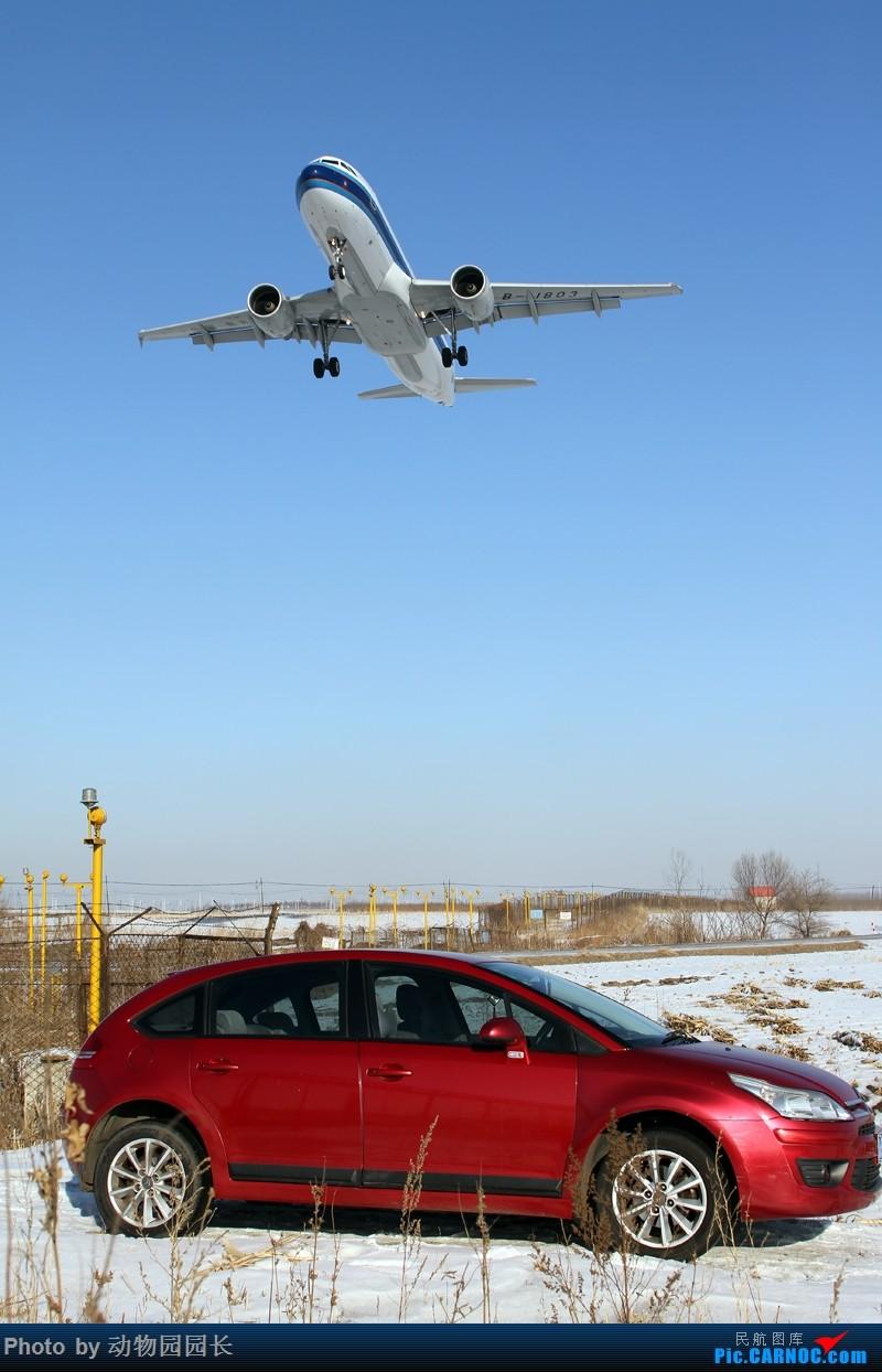 Re:[原创]【CASG】★★★这天~ 这雪~ 这地~!——冬天里无法抗拒的诱惑~!★★★ AIRBUS A320-200 B-1803 中国沈阳桃仙国际机场