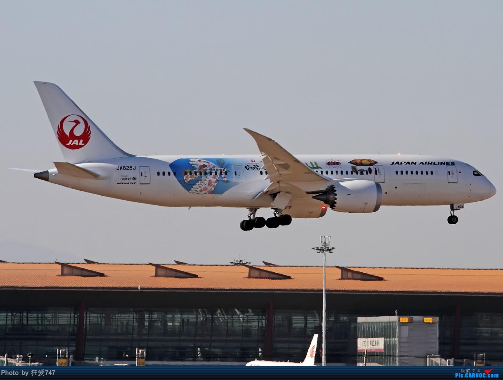 Re:[原创]这些年首都机场的787们 BOEING 787-8 JA828J 中国北京首都国际机场