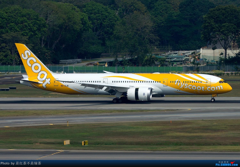 Re:[原创]【红茶拍机】新加坡樟宜拍机,duang都是国内少见货色! BOEING 787-9 9V-OJB 新加坡樟宜机场