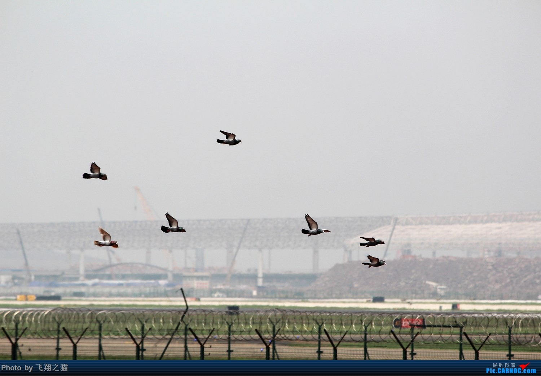 Re:[原创]重庆飞友欢送澳大利亚朋友     空中安全员