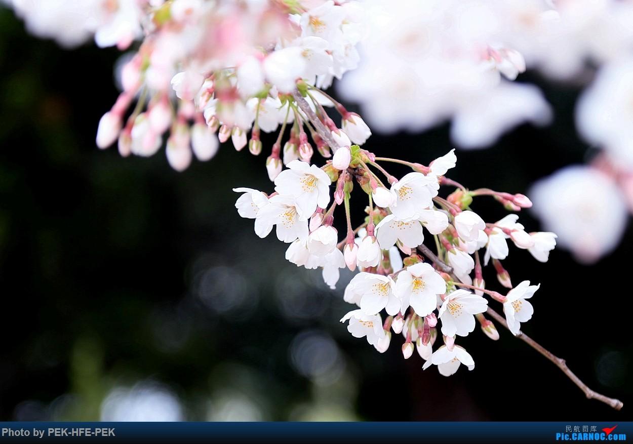 Re:[原创]【AutumnKwok】严重拖延症。。。四月青岛行拍机成果外加来回程的一些图。解决了不少以前没拍过的货~