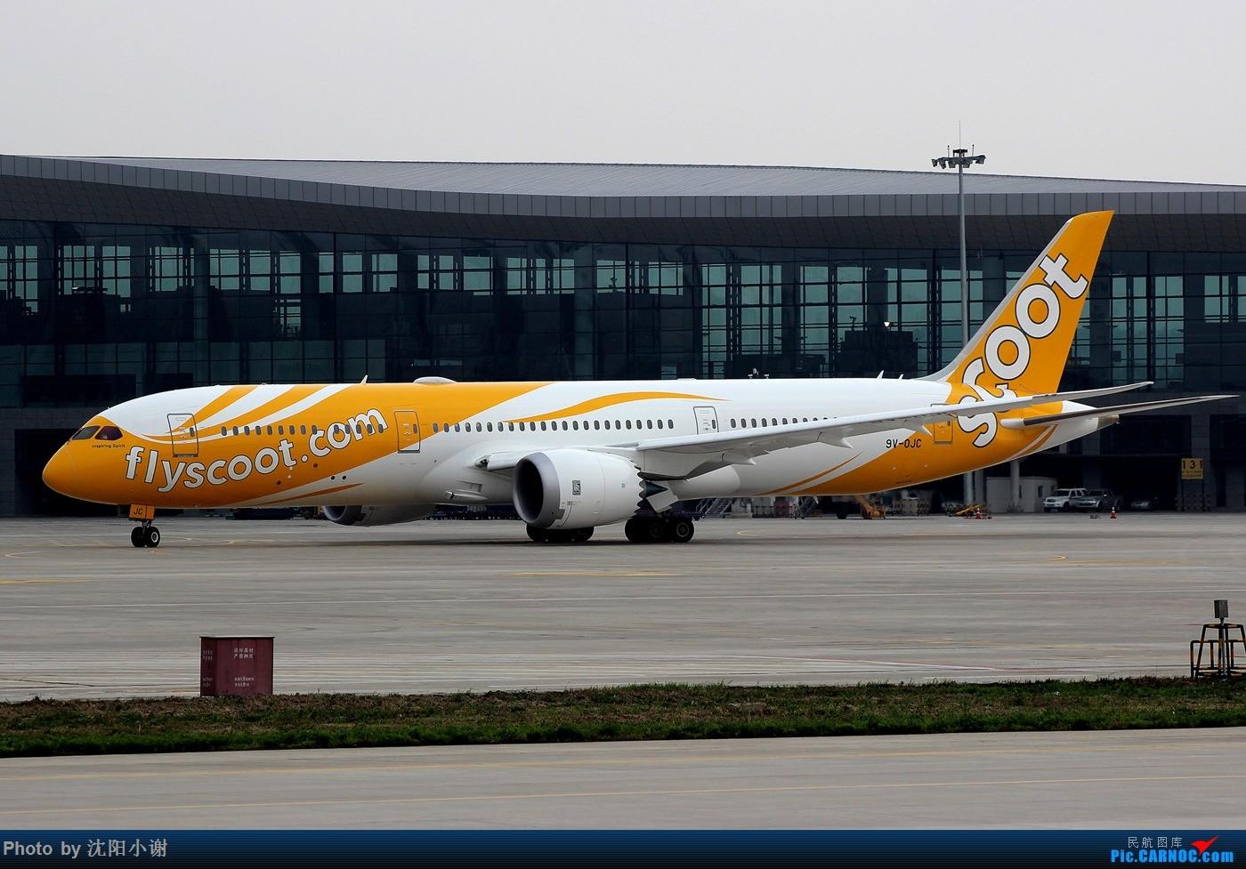 ��k��n�9ojzd��c�����f_boeing 787-9 9v-ojc 中国沈阳桃仙国际机场