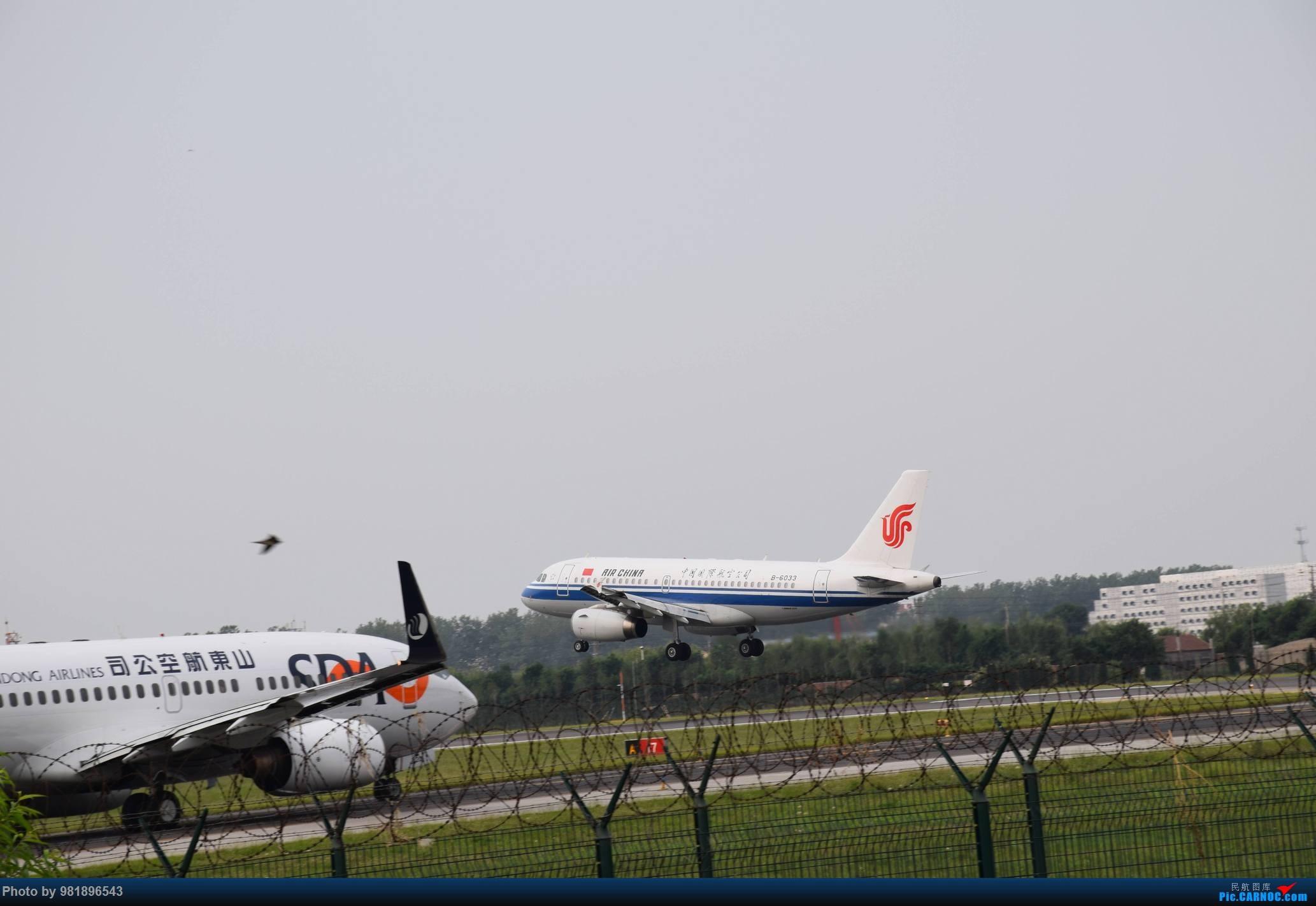 Re:[原创]【新人拍机】青岛周日的一天 AIRBUS A319-100 B-6033 中国青岛流亭国际机场