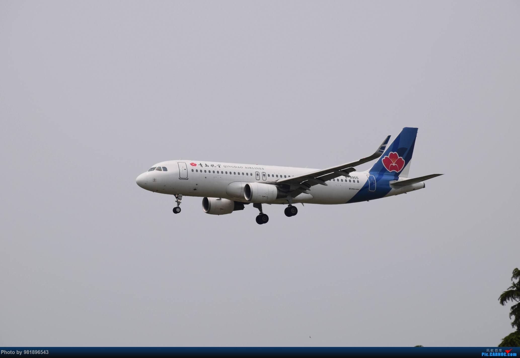 Re:[原创]【新人拍机】青岛周日的一天 AIRBUS A320-200 B-9955 中国青岛流亭国际机场