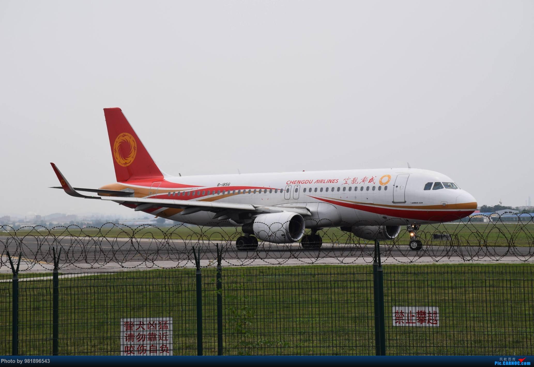 Re:[原创]【新人拍机】青岛周日的一天 AIRBUS A320-200 B-1856 中国青岛流亭国际机场