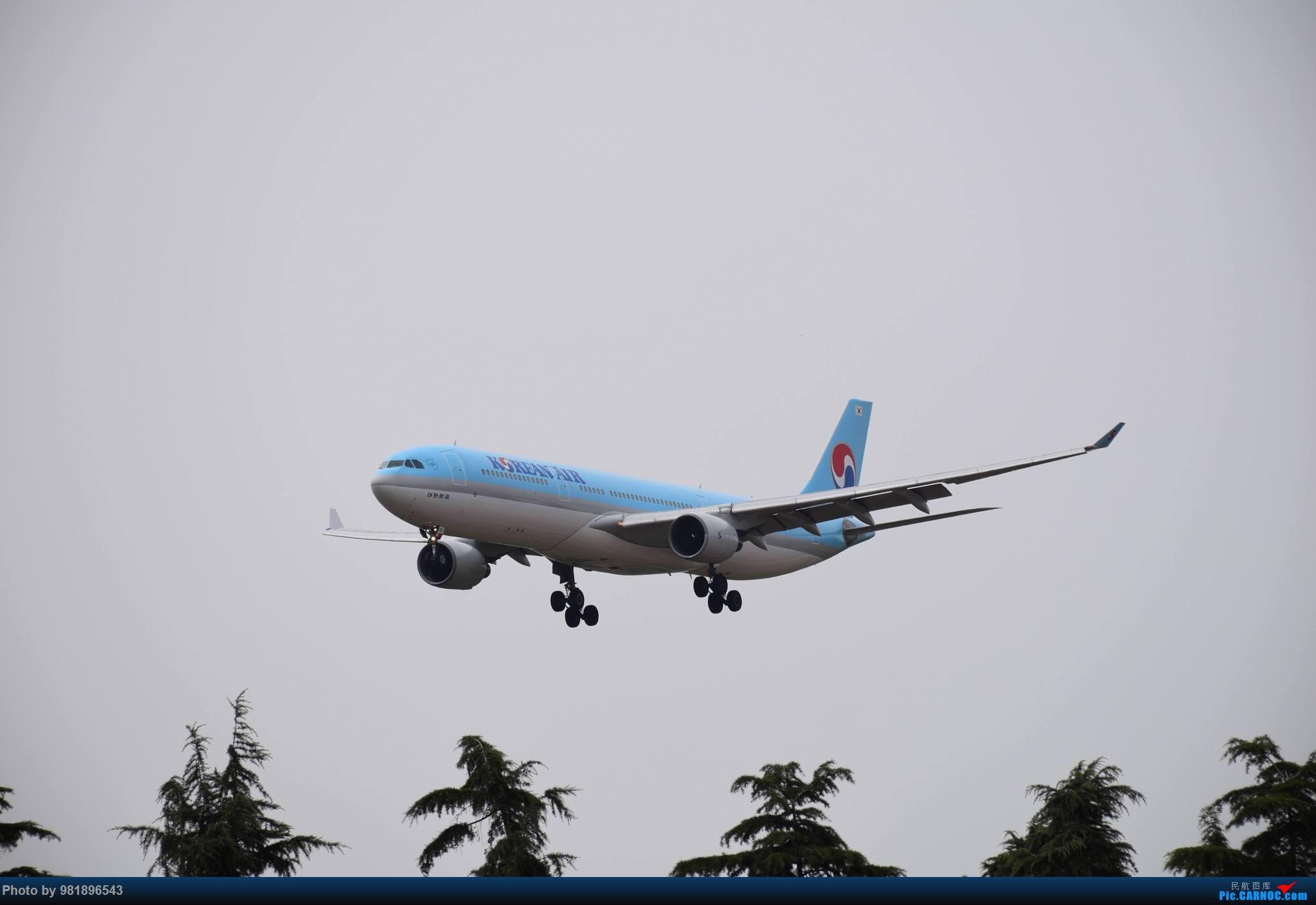 Re:[原创]【新人拍机】青岛周日的一天 AIRBUS A330-300 HL7551 中国青岛流亭国际机场