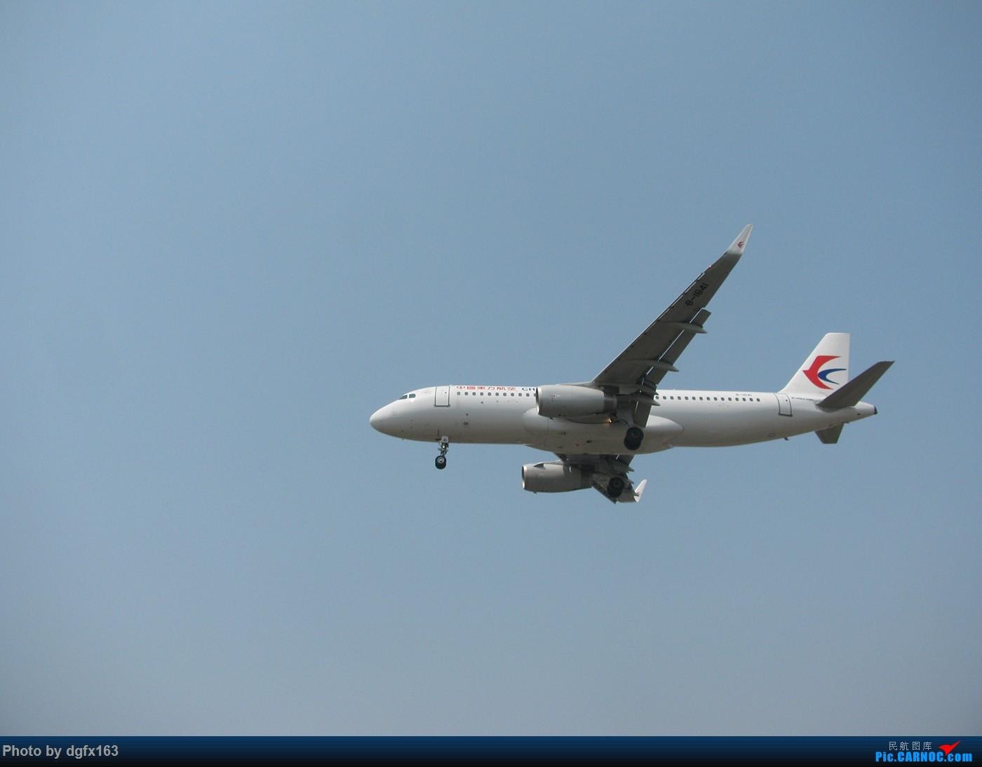 Re:[原创]【dgfx163的拍机(1)大连周水子DLC,烈日拍机1小时半。全日空、日本航空、大韩。。。还不错 AIRBUS A320-200 B-1641 中国大连周水子国际机场