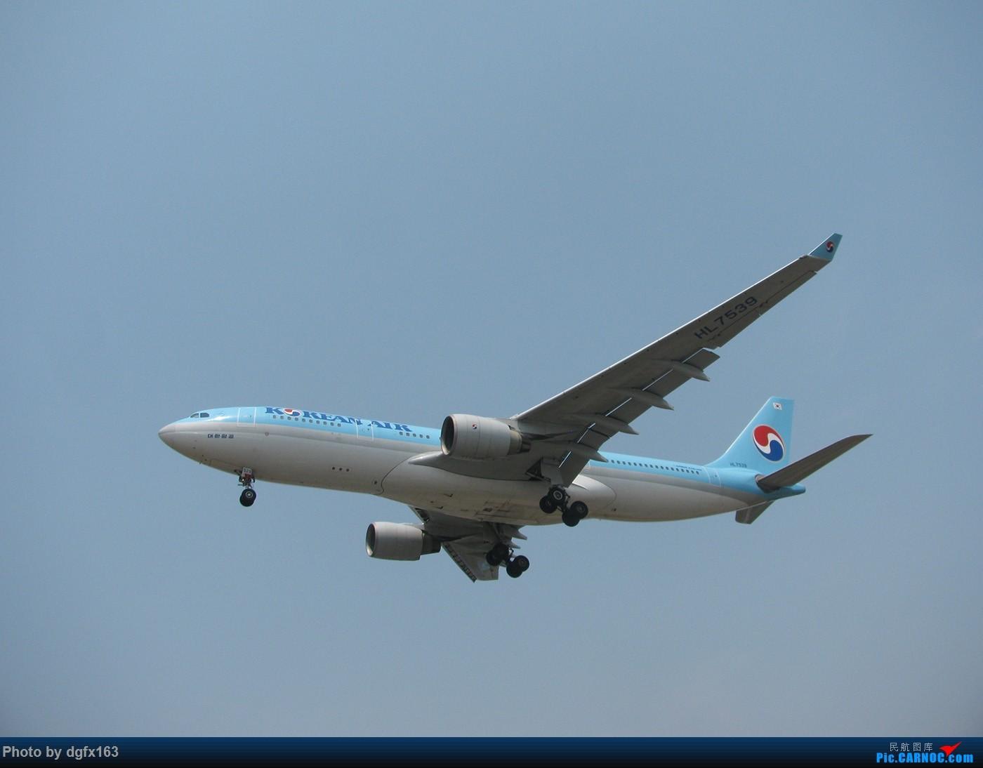 Re:[原创]【dgfx163的拍机(1)大连周水子DLC,烈日拍机1小时半。全日空、日本航空、大韩。。。还不错 AIRBUS A330-200 HL7539 中国大连周水子国际机场