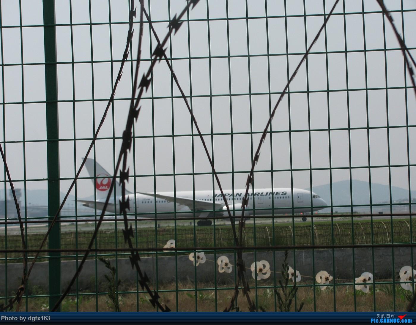 Re:[原创]【dgfx163的拍机(1)大连周水子DLC,烈日拍机1小时半。全日空、日本航空、大韩。。。还不错 BOEING 787-8 JA829J 中国大连周水子国际机场