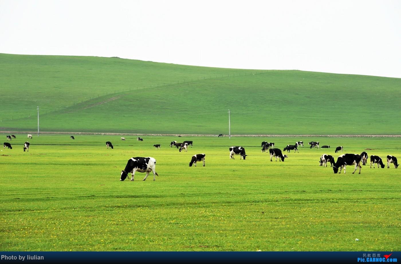路上的风景只有奶牛,马,羊群以及绿草,蓝天,白云.