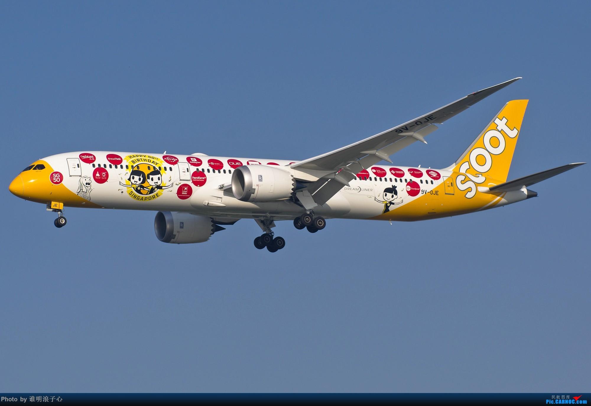 Re:[原创]【TSN飞友会】清库存 BOEING 787-9 9V-OJE 中国天津滨海国际机场