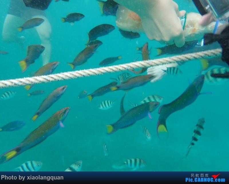 海洋垃圾长畸形的动物