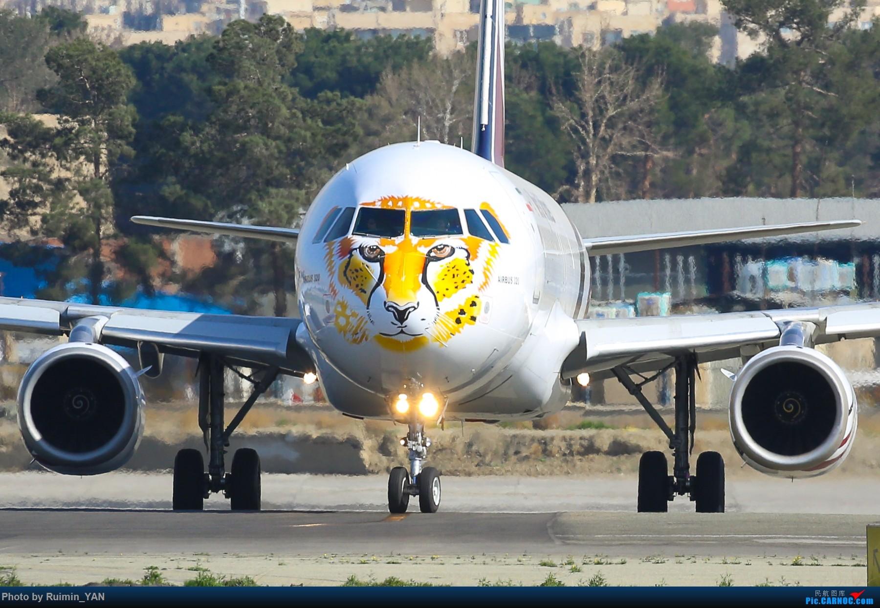 [原创]【THR】(德黑兰梅赫拉巴德机场)伊朗Meraj航空(Meraj Airlines,IJ)新涂的保护老虎猎豹彩绘--空客320,AB6 AIRBUS A320-200 EP-AJI 伊朗德黑兰机场