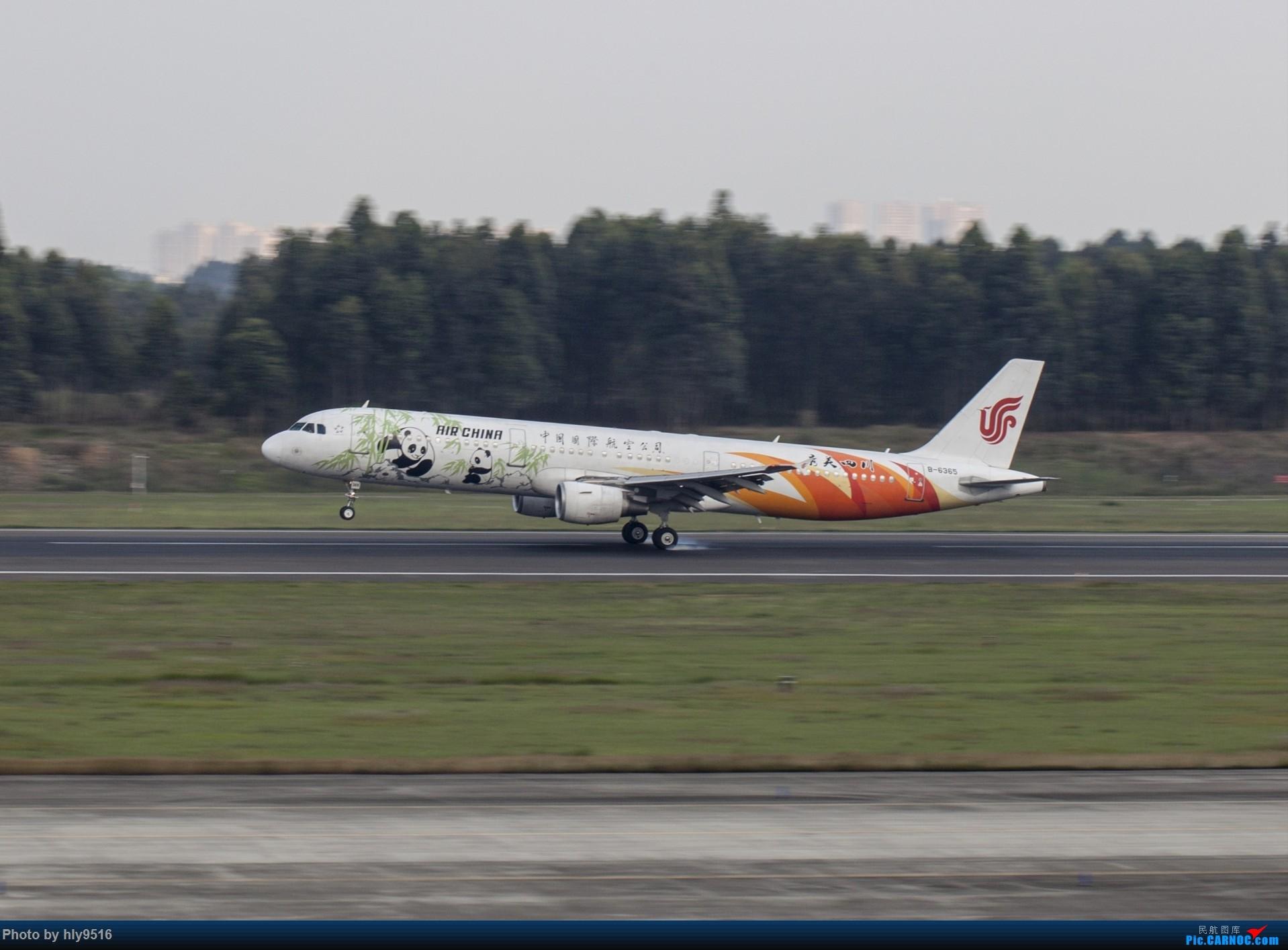 Re:[原创]【CTU】终于解决了大怨念南航A380 偶遇长荣新涂装 两次复飞 小怨念若干 AIRBUS A321-200 B-6365 中国成都双流国际机场