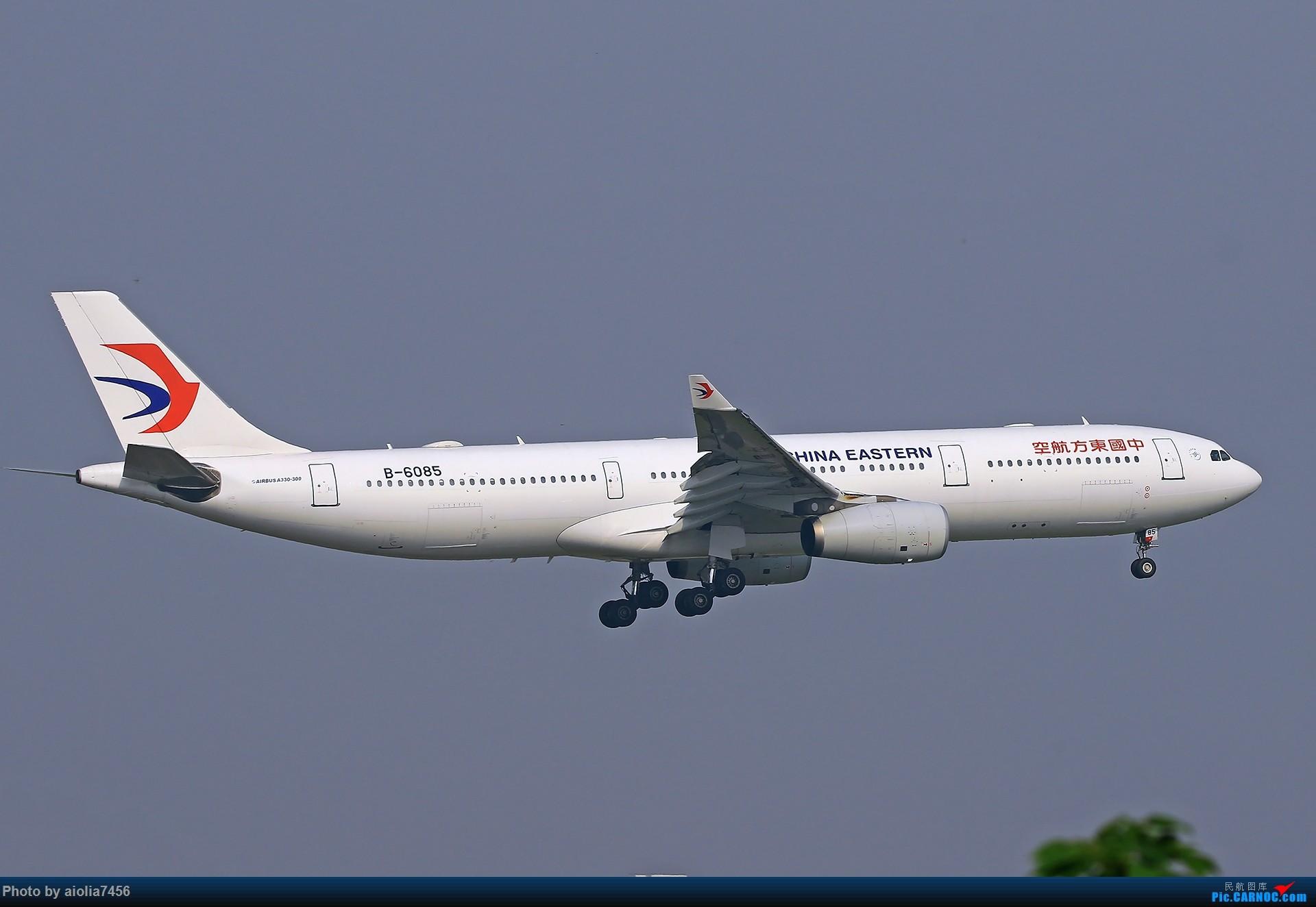 [原创][合肥飞友会]【【村夫进城系列之四】原来上海大飞机看多了也会审美疲劳 AIRBUS A330-300 B-6085 中国上海虹桥国际机场
