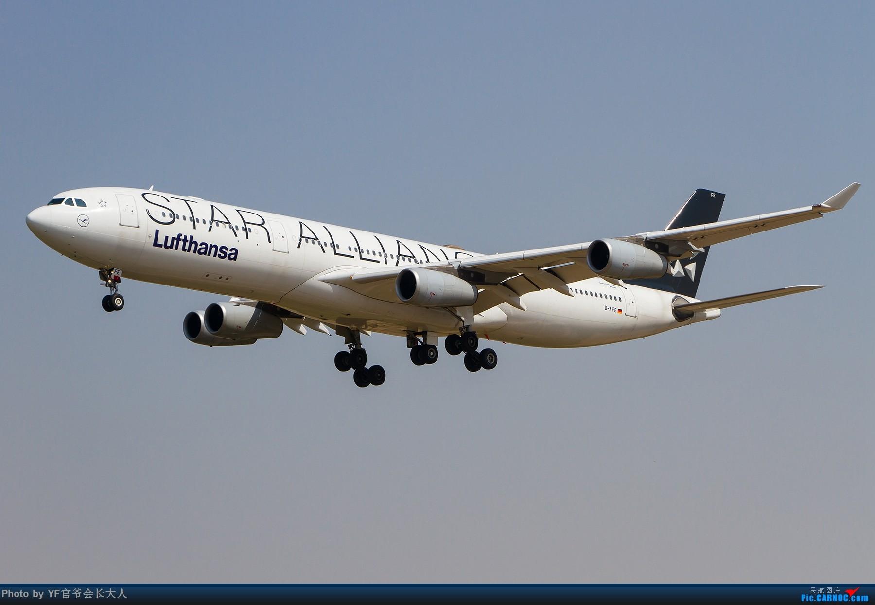 Re:[原创]【ZYTX】轻易不拍机,拍就要拍个过瘾!(新开的酷鸟,亚洲大西洋,顺带碰上朝韩两国的好货) AIRBUS A340-300 D-AIFE 中国沈阳桃仙国际机场