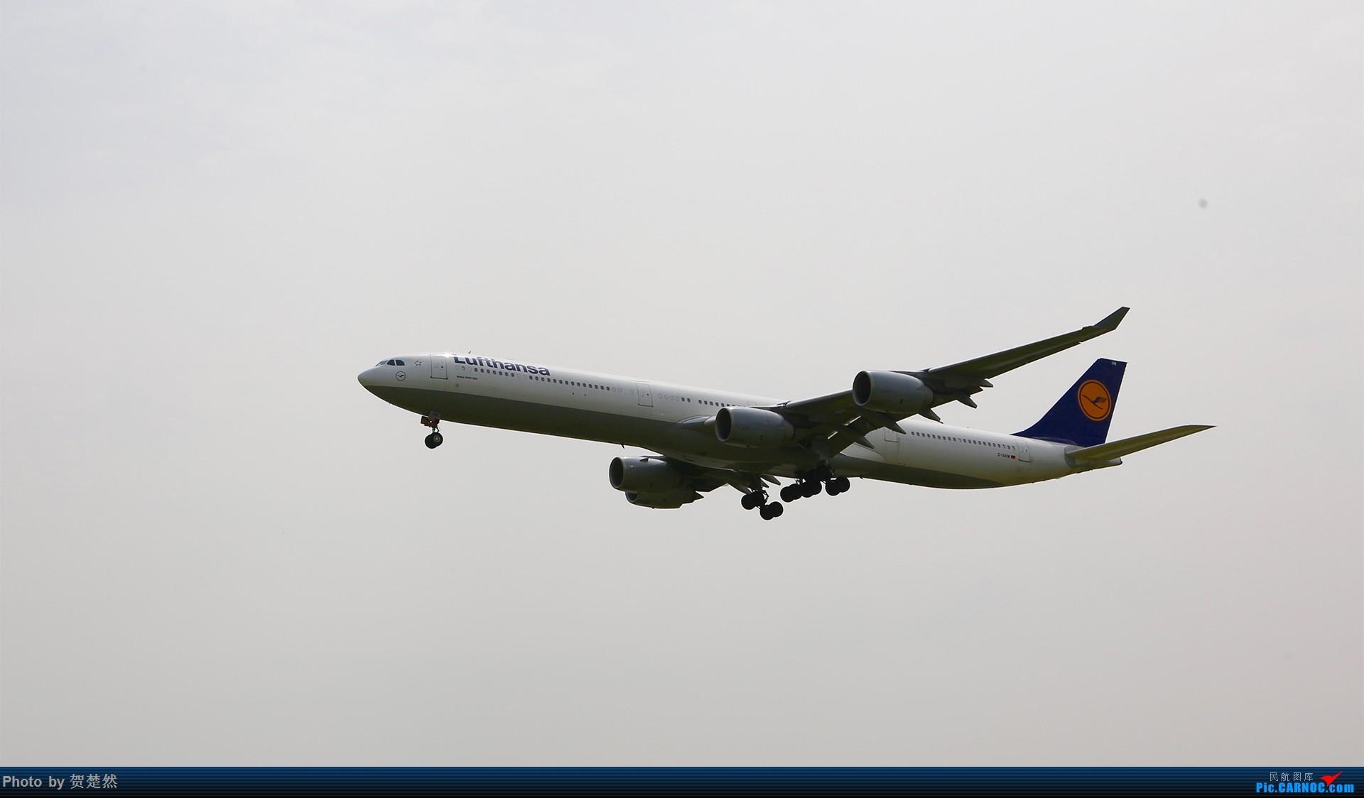 [原创]高考同时高一党ZBAA拍机 AIRBUS A340-600 D-AIHW 北京首都国际机场