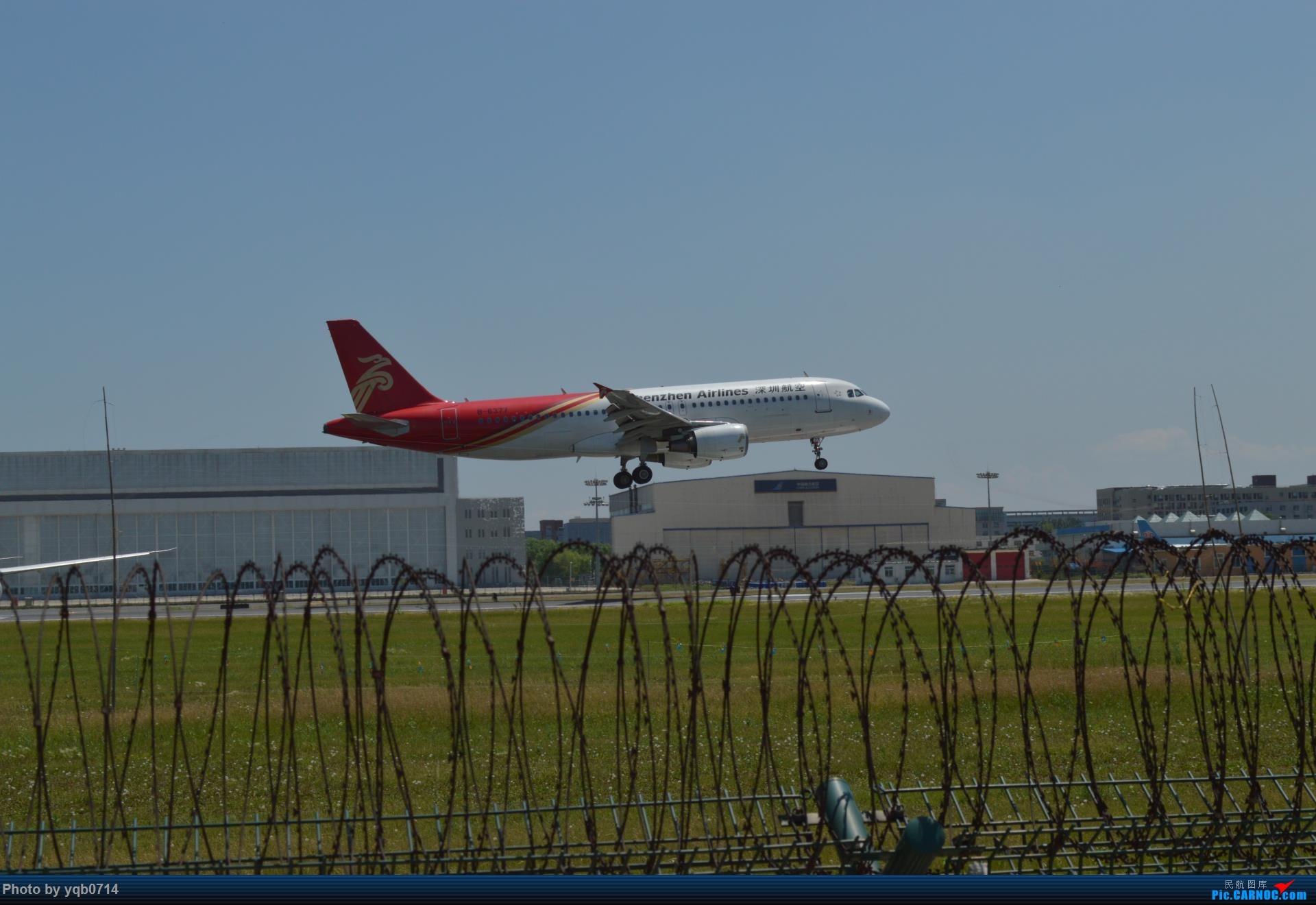 Re:[原创]出来炸道,喜欢星空联盟的小反!!!! AIRBUS A320-200 B-6377 沈阳桃仙