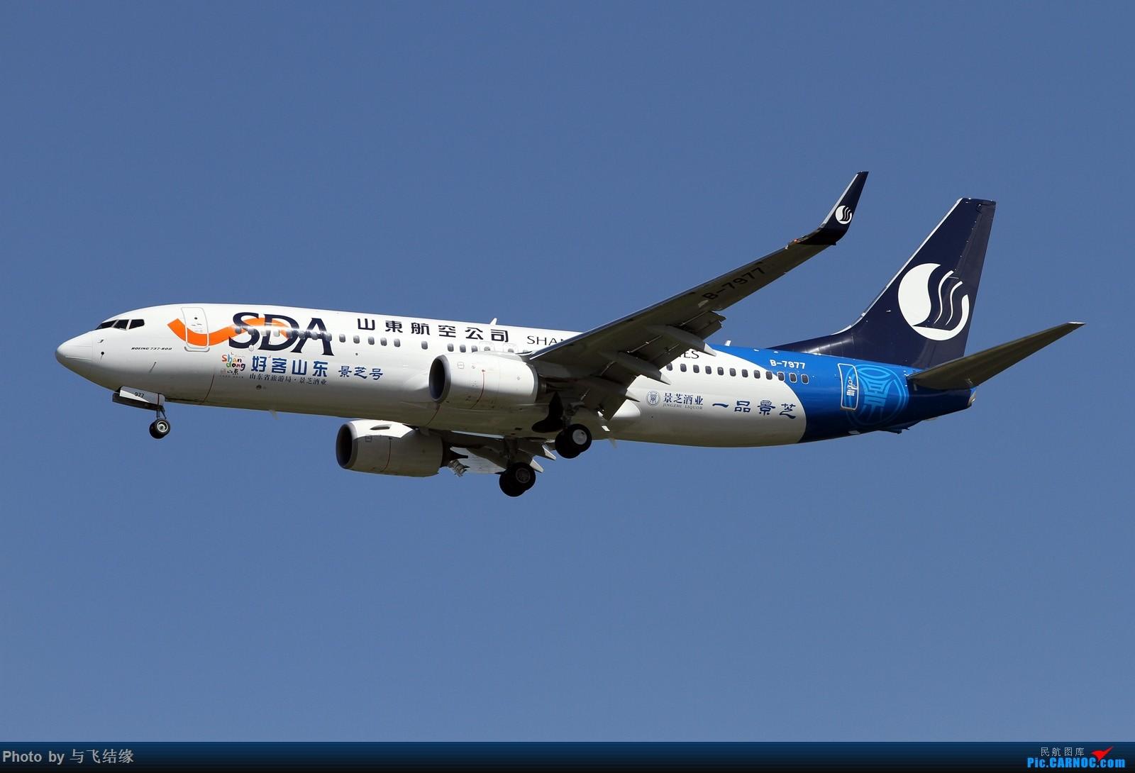 "Re:[原创]山东航空最新波音737-800彩绘机""好客山东—景芝号""及其其它的一些一些! BOEING 737-800 B-7977 中国北京首都国际机场"