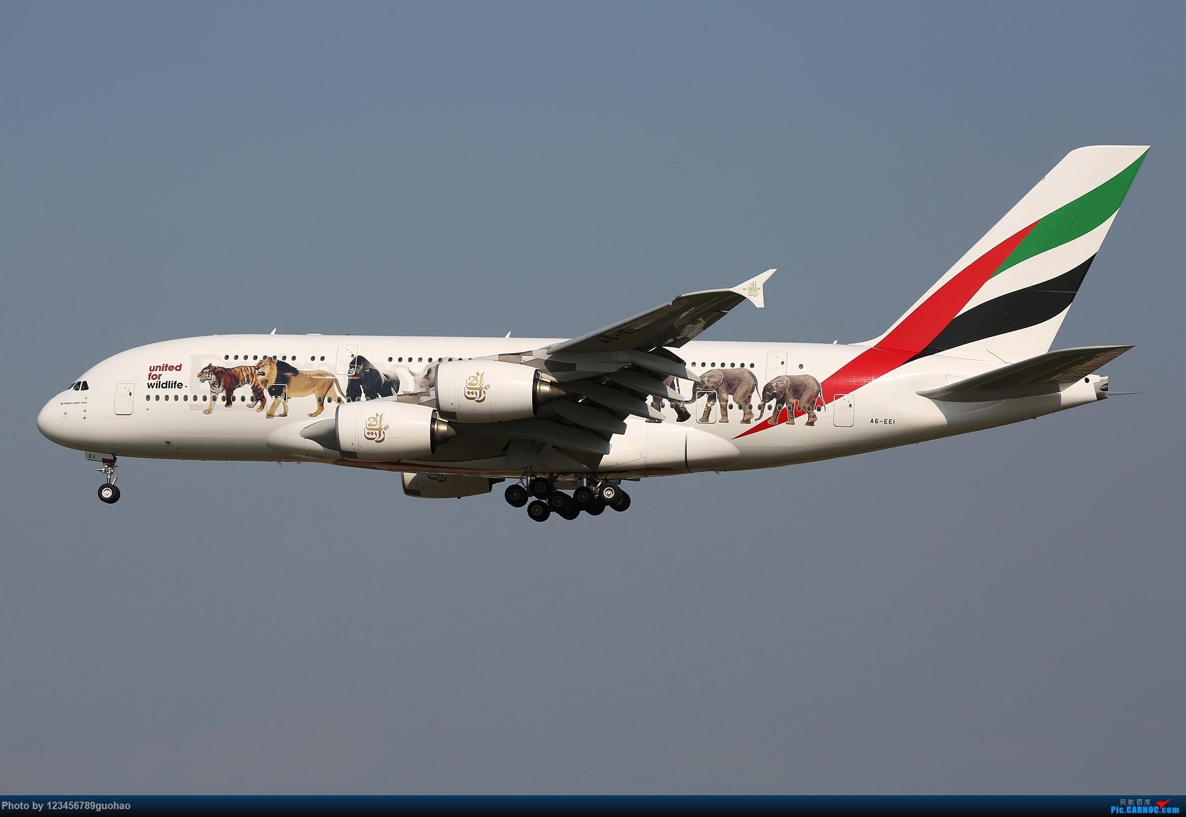 [原创]请保护我们身边的野生动物 AIRBUS A380-800 A6-EEI 北京首都机场