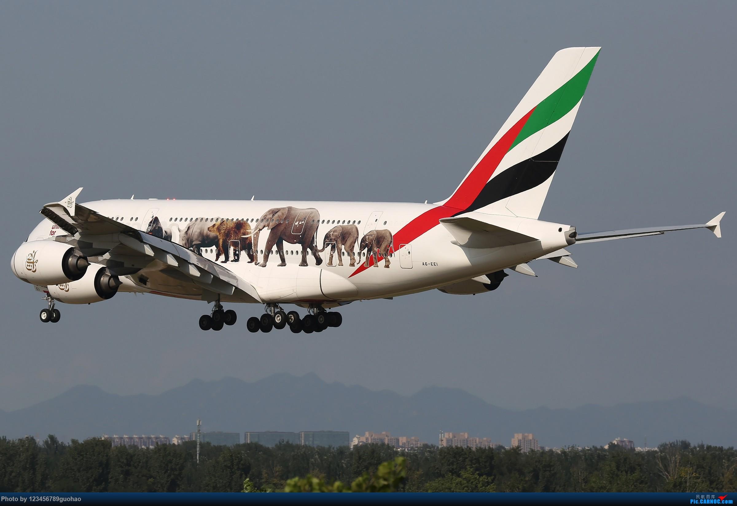 Re:请保护我们身边的野生动物 AIRBUS A380-800 A6-EEI 北京首都机场