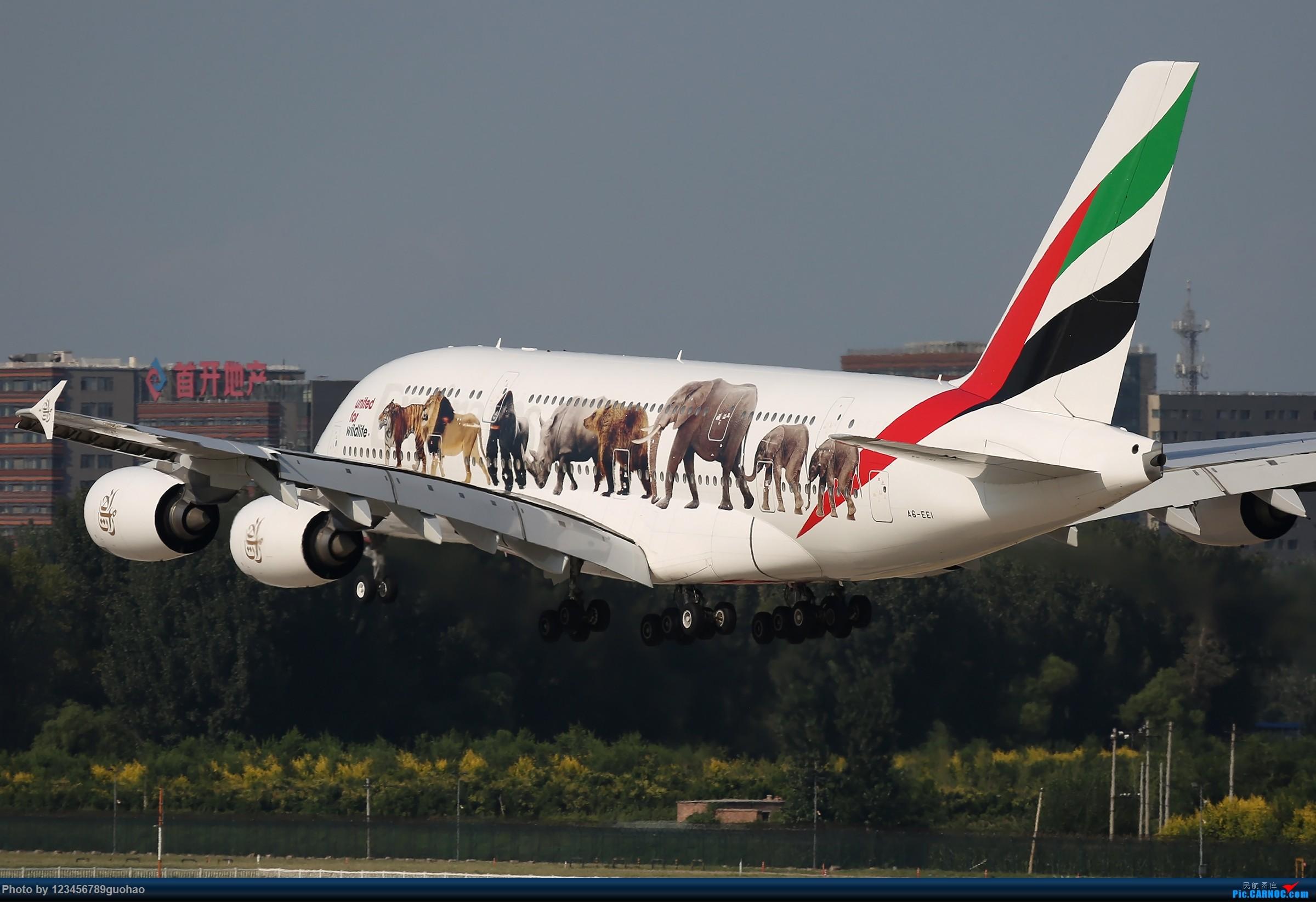 Re:[原创]请保护我们身边的野生动物 AIRBUS A380-800 A6-EEI 北京首都机场