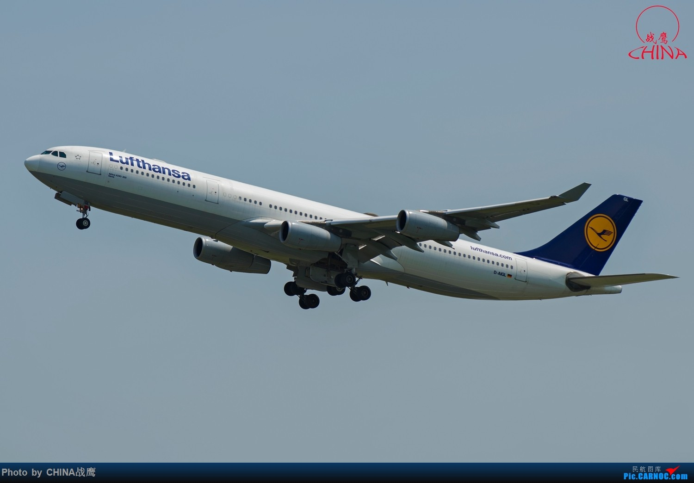 Re:[原创]【SHE】拍飞机的乐趣2 AIRBUS A340-300 D-AIGL 中国沈阳桃仙国际机场