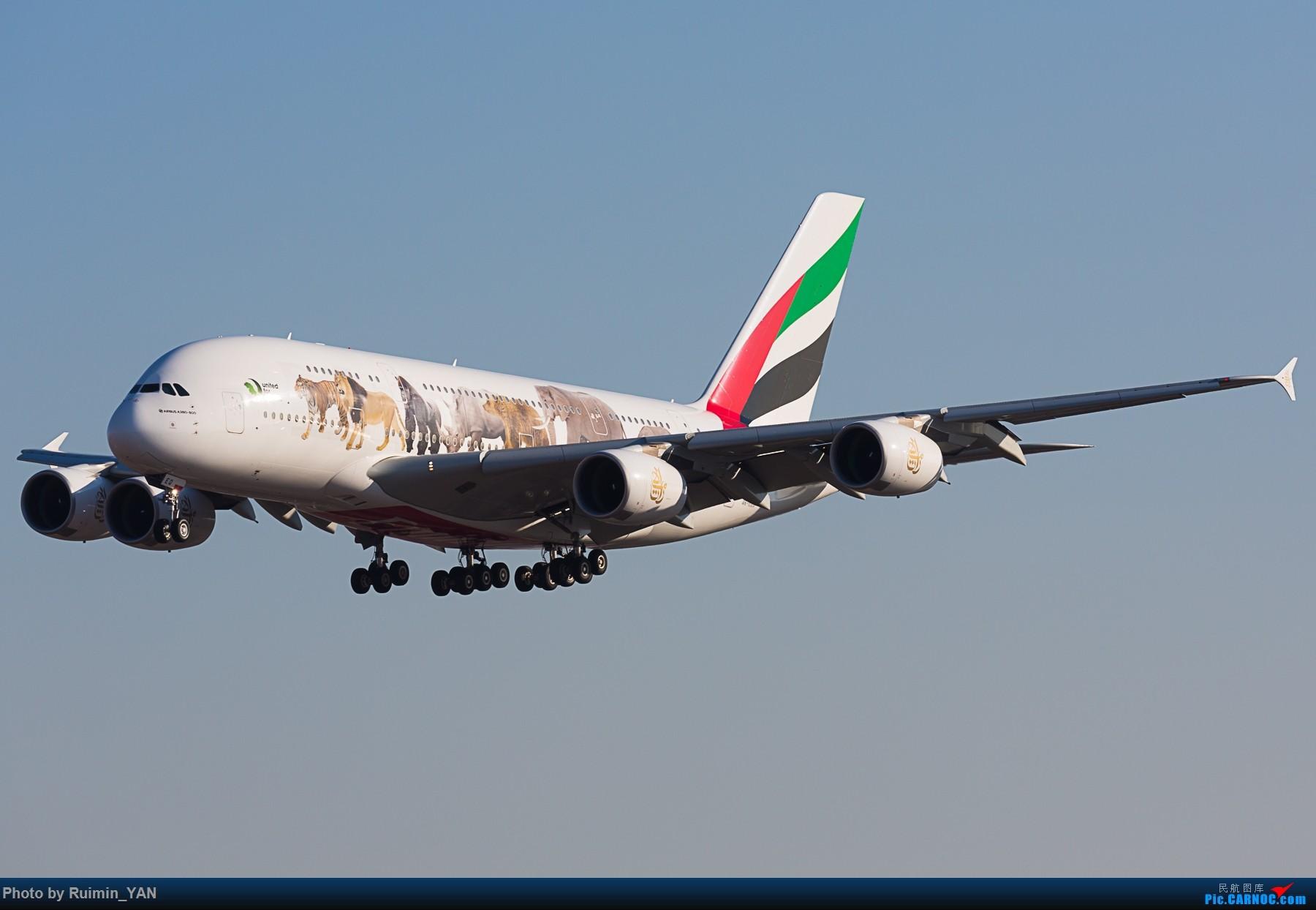 [原创]【PEK】【彩绘】阿联酋航空保护野生动物No.3(EK,Emirates,United For Wildlife) AIRBUS A380-800 A6-EEQ 中国北京首都国际机场