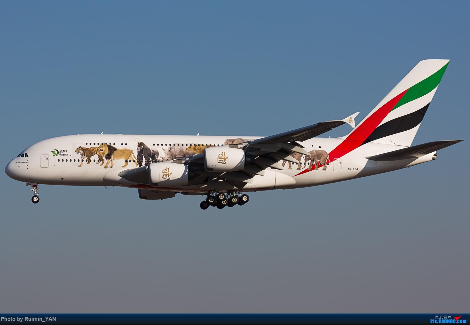 Re:[原创]【PEK】【彩绘】阿联酋航空保护野生动物No.3(EK,Emirates,United For Wildlife) AIRBUS A380-800 A6-EEQ 中国北京首都国际机场